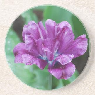 Blooming Purple Parrot Tulip Coaster