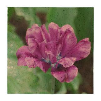 Blooming Purple Parrot Tulip Beverage Coaster