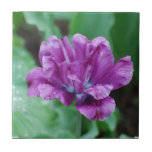 Blooming Purple Parrot Tulip Small Square Tile
