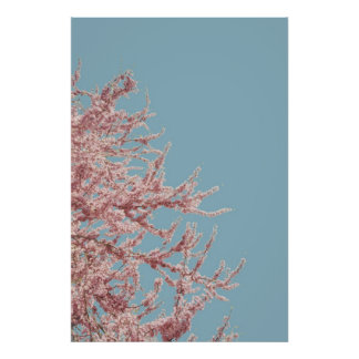 Blooming Red Bud Tree Poster