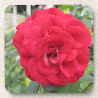 Blooming Red Rose Flower Beverage Coasters