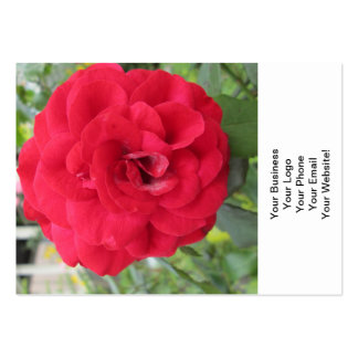 Blooming Red Rose Flower Large Business Card