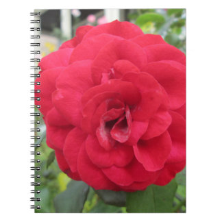 Blooming Red Rose Flower Spiral Notebooks