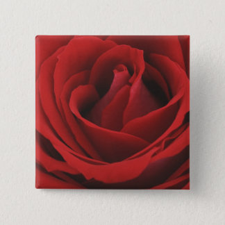 Blooming Red Rose Pinback Button