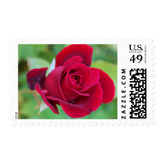 Blooming Red Rose Stamps