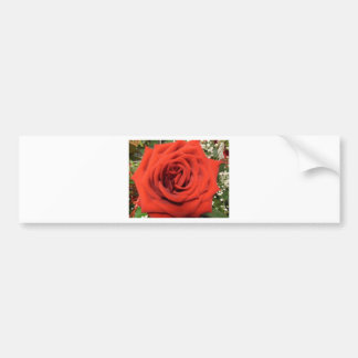 Blooming Rose Bumper Stickers