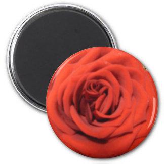 Blooming Rose Magnet