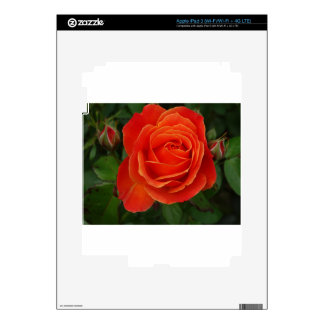 Blooming Rose Orange Red Decal For iPad 3