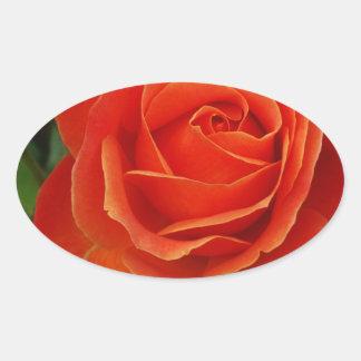 Blooming Rose Orange Red Oval Sticker
