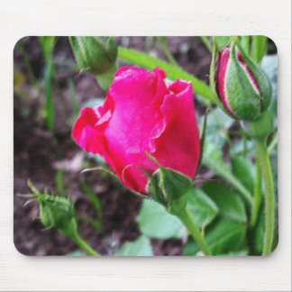 blooming roses pastel mouse pad