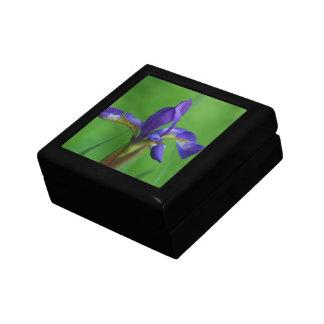 Blooming Siberian Iris Gift Box