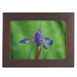 Blooming Siberian Iris Memory Box