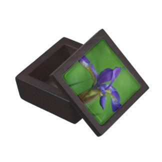 Blooming Siberian Iris Premium Keepsake Boxes