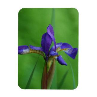 Blooming Siberian Iris Rectangle Magnets