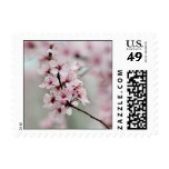 Blooming Spring Cherry Blossoms Postage