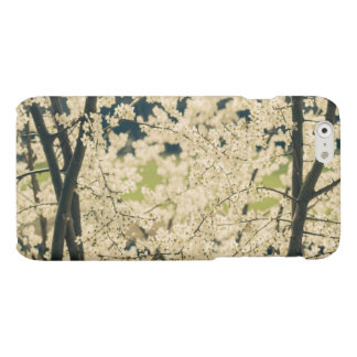 Blooming Spring Flowers on Trees Matte iPhone 6 Case