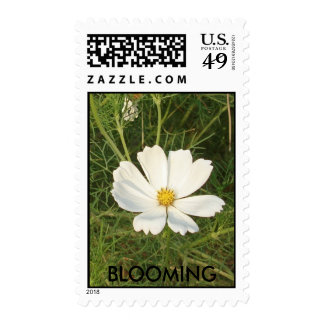 BLOOMING STAMP