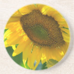 Blooming Sunflower Coaster