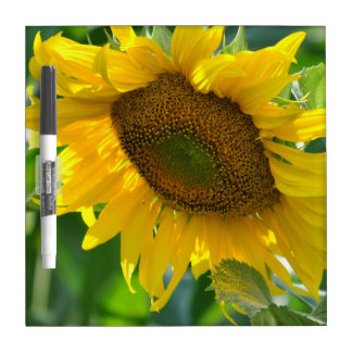 Blooming Sunflower Dry Erase Board