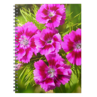 Blooming Sweet William Flowers Spiral Notebooks