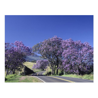 Blooming trees along road in Haleakala, Maui, Postcard