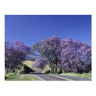 Blooming trees along road in Haleakala, Maui, Postcard