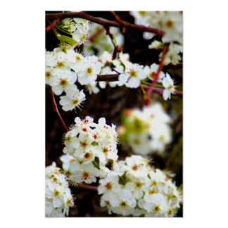 Blooming trees in the spring poster