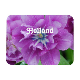 Blooming Tulips in Holland Magnet
