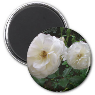 Blooming White Roses 2 Inch Round Magnet