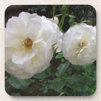 Blooming White Roses Beverage Coaster