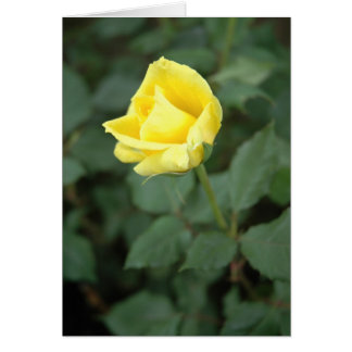 Blooming Yellow Rose Card
