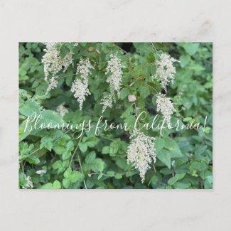 Bloomings from California: Ocean Spray Postcard