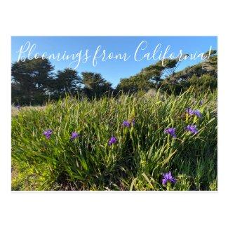 Bloomings from California: Pacific Coast Irises Postcard