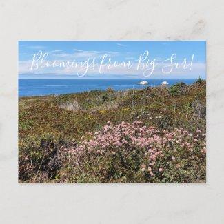 Bloomings from California: Sea Cliff Buckwheat Pos Postcard
