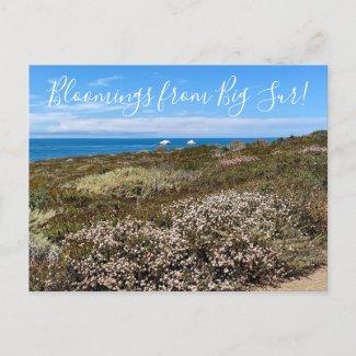 Bloomings from California: Sea Cliff Buckwheat Postcard