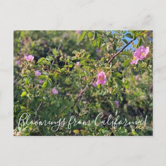 Bloomings from California: Wild Rose Postcard