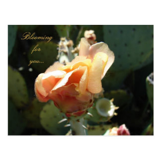 Blooms for You Postcard