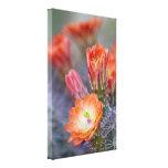 Blooms in orange cactus blossom canvas prints