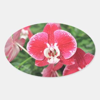 Bloosom rojo de la orquídea