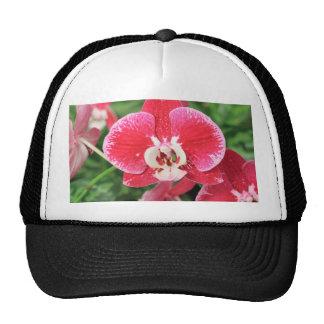 Bloosom rojo de la orquídea gorras de camionero