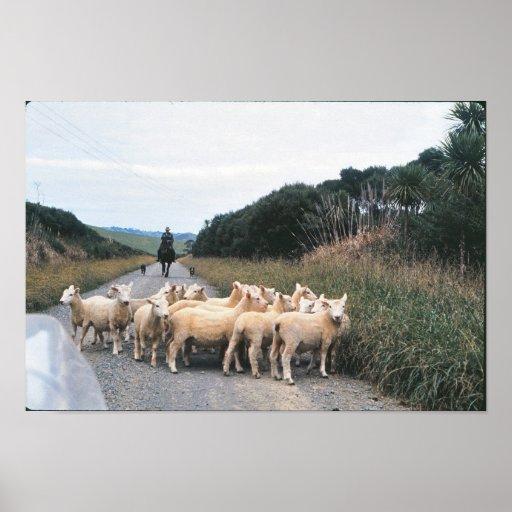 Bloque de camino de Nueva Zelanda Póster