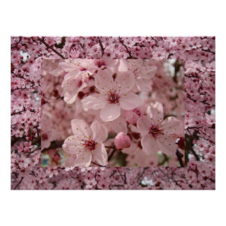 Blossom Art Pink Spring Tree Blossoms Prints Print