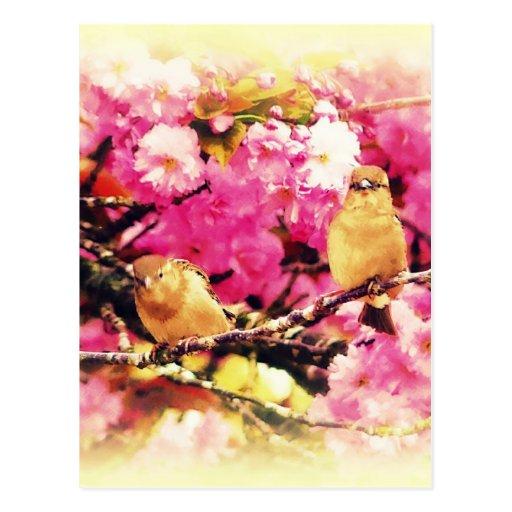 Blossom Birdies Postcard