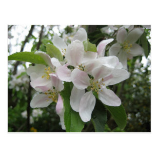 Blossom Boquet Postcard