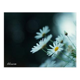 blossom by lim_es postcard