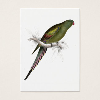 Blossom-Feathered Parrakeet by Edward Lear Business Card