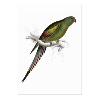 Blossom-Feathered Parrakeet by Edward Lear Large Business Card