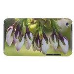 Blossom Flower Buds iPod Case-Mate Case