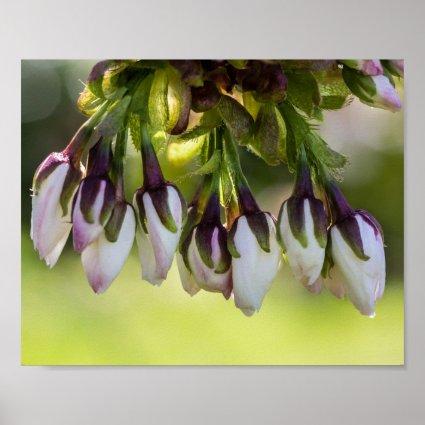Blossom Flower Buds Poster
