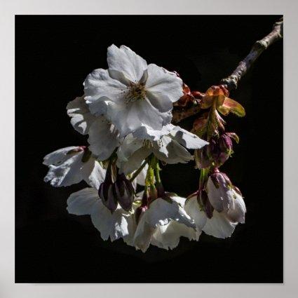 Blossom Flowers Print